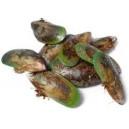 Green Lipped Mussel Powder 500g